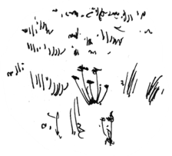 simple grass strokes for pen and ink drawing