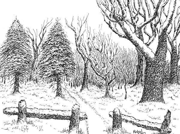 Step By Step: Drawing Snow Covered Pine Trees With Pen And ...